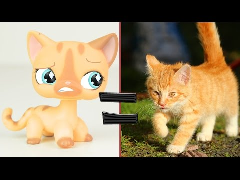 LPS in Real Life! #2 Littlest Pet Shop Popular Cats and Dogs in Real Life | MLP Fever
