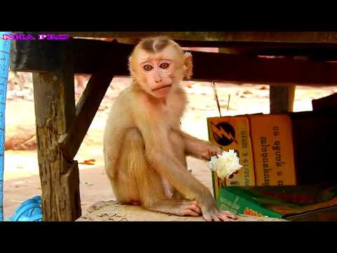 P2 : Breaking Heart ! That must be the reason why this little monkey was abondened