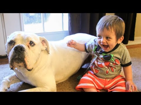 Dog Loves Baby When the First Time They Met Compilation 2017
