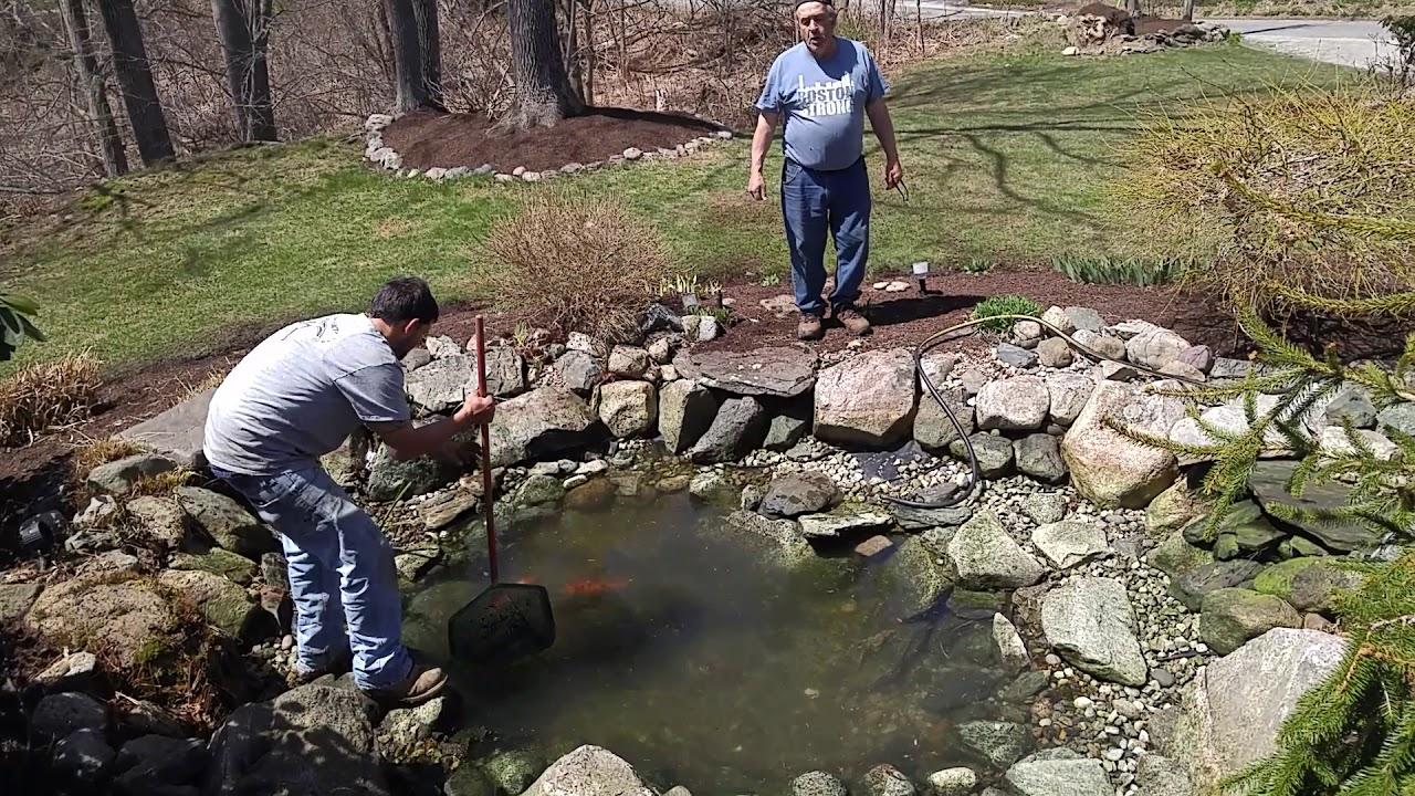 Pond rapup