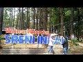 - Wisata Sreni Indah Jepara | Hutan Pinus