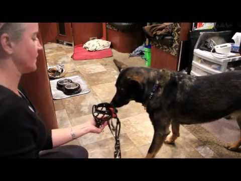 dash-clicker-training---muzzle---day-#2