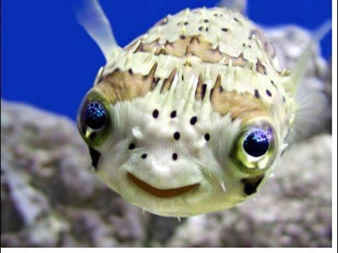 Ocean Life - An Exotic Underwater Adventure (1080p)