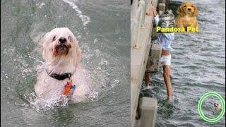溺れた犬を見て、躊躇わずに海に飛び込もうとした青年。 - Pandora Pet thumbnail