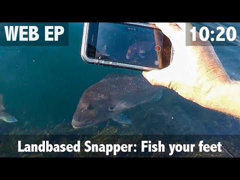 Landbased Snapper: Fishing your feet
