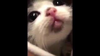 Funny cats #19
