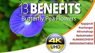 13 Benefits Butterfly Pea Flowers (See Description below)