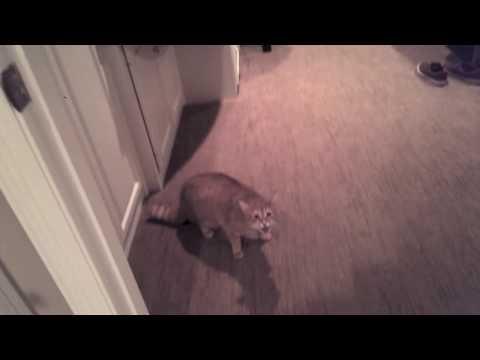 Deuce - WHOA, Mean Kitty Traps & Attacks Friend In Bathroom