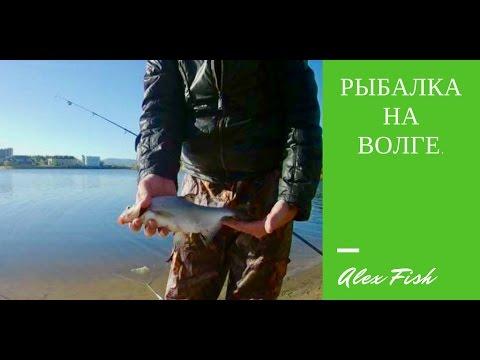 Рыбалка на Волге. Ловля карася. Рыбалка на донку.