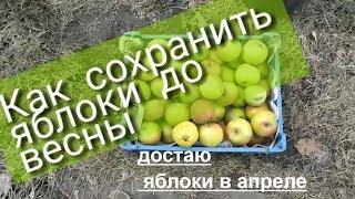 Как сохранить яблоки до весны. МИНИ ПОГРЕБ ИЗ ВЕДРА