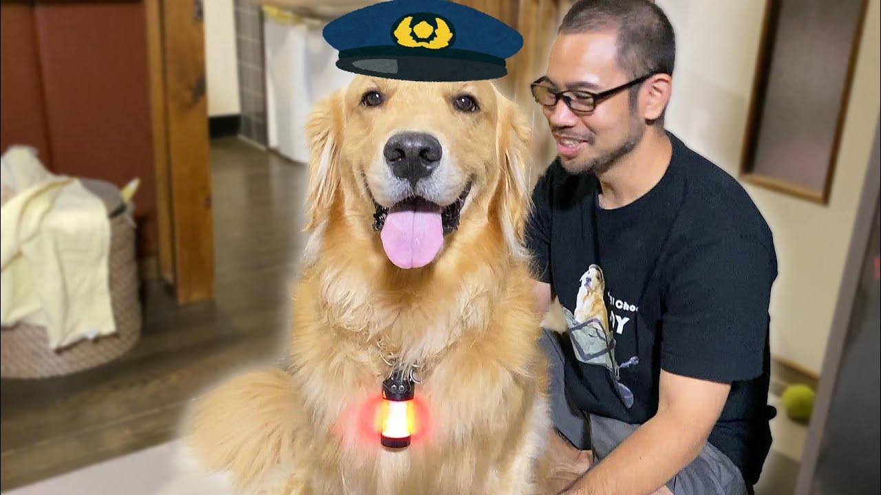 散歩中は言う事を聞いてくれない犬のお巡りさん