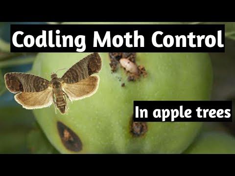 Codling Moth Control