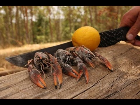 Freshwater YABBIES - Catch n Cook | TDB