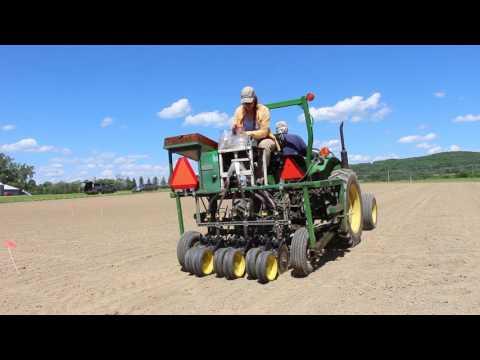 Industrial hemp planting
