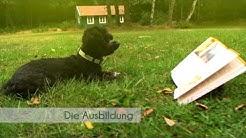 Hundetrainerausbildung auch im Fernstudium mit Vorbereitung zur behördlichen Zertifizierung