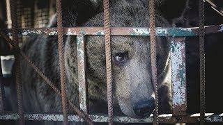 Новый дом для трёх медведей: после публикации RT мэр Магаса спас животных от продажи на мясо