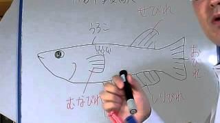 神奈川・東京などで家庭教師をさせていただいております。 よろしくお願...