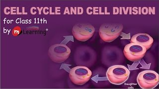 CELL CYCLE AND CELL DIVISION - 01 For Class 11th and AIPMT