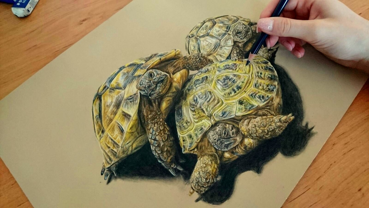 Colored pencil drawing tortoise speed draw josymovies