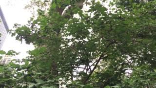 マディソン・スクエア・パークと小鳥たち