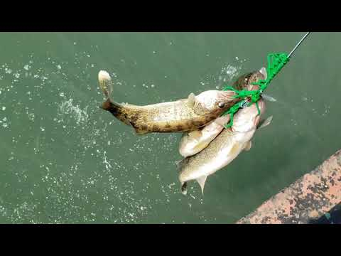 WALLEYE | PICKEREL SPRING FISHING | WINDSOR CANADA