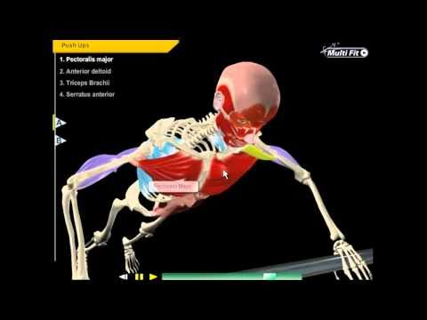 what muscles do a push up use? - youtube, Muscles