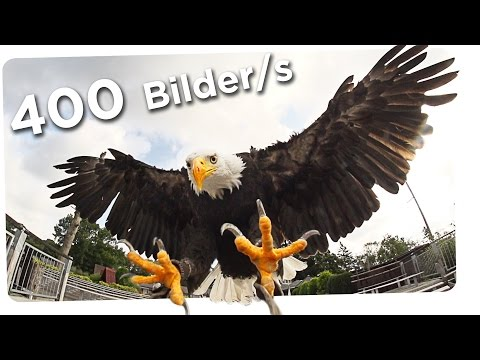 Adler in SlowMotion