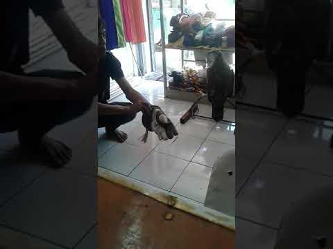 sikep madu training