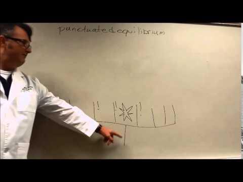 BarnesBasics:  Gradualism versus punctuated equilibrium