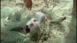 Comercial 99 - Volkswagen SpaceFox: Fish Dog