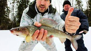 Первая в жизни зимняя рыбалка 2020 Попали на жор хариуса Добрые походы