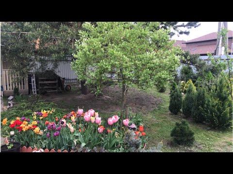 Моя любимая дача 26 мая 2020. Посадила всю рассаду. Привезли землю. Обзор сада.