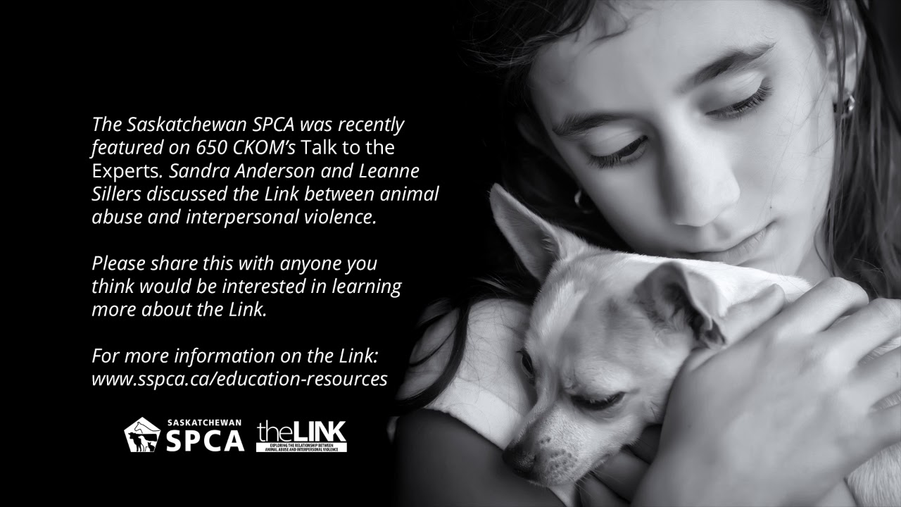 The Saskatchewan SPCA on Talk to the Experts