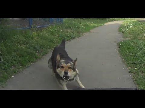 Перцовый баллончик Контроль-УМ против Собак-10 Перец. pepper spray dogs. велосипедист #289