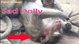Heart Broken When See Dolly Bitten By Amber Group / Dolly Looking So Tired Need PE Help  / PTM 844
