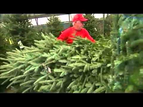 Ergle Christmas Tree Farm.Daytime Behind The Scenes At A Christmas Tree Farm