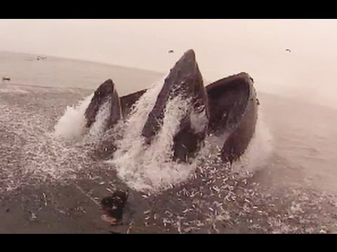 Whale Almost Eats Diver