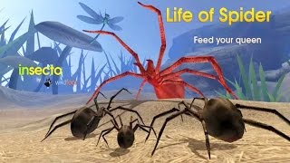 Life of Spider Android Gameplay