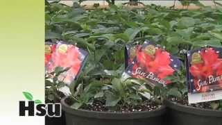 Hsu Growing Supply Pre Filled Pots And Trays