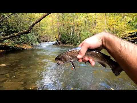 North Carolina Fly Fishing For Trout