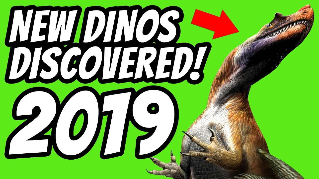 New Dinosaur Discovery 2019 Amazing New DINOSAUR Discovered In 2019!   YouTube