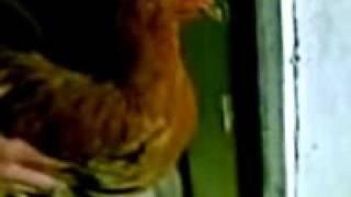 курица Майкл Джаксон