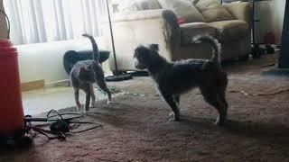 dog & cat wont stop fighting