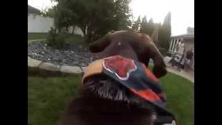 Frankie The German Shorthaired Pointer Gopro Hero 3 Raw Speed
