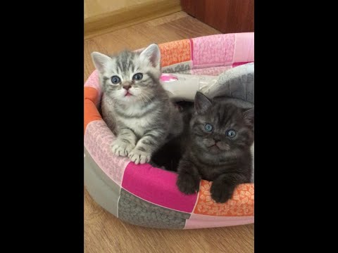 😍 Cute Kittens Doing Funny Things 2020 😍 # 3 Cutest Cats