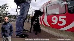 Stadttraining - Hundeschule Düsseldorf