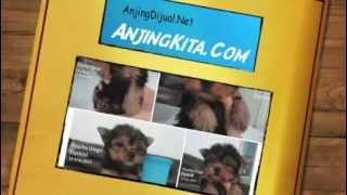 Anjing Dijual 2 Anjingdijual.net Anjingkita.com.m4v