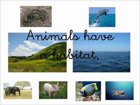 animals habitat song