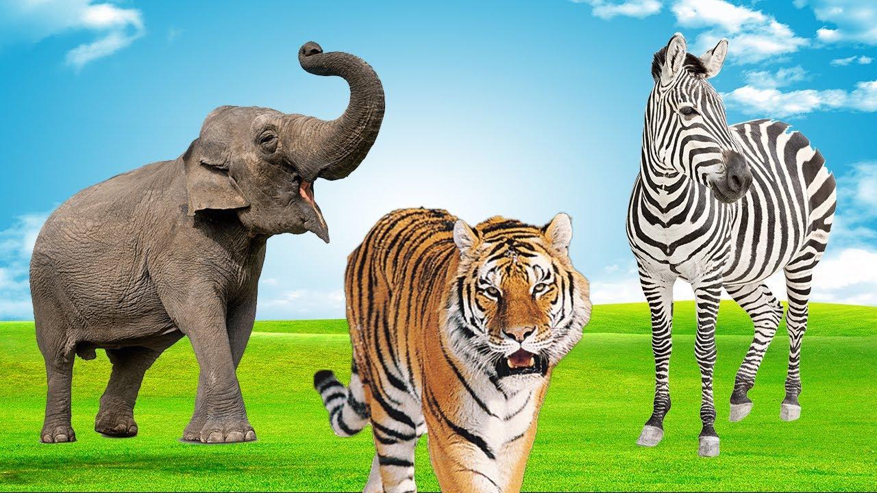 Wild Animal Sound - Animais Selvagens ! #shorts
