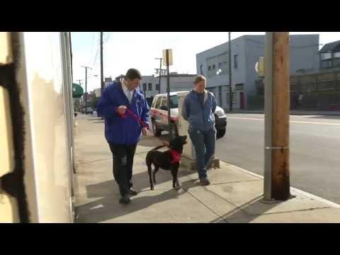 Bob's volunteer dog walking adventure - Fox 21/27 Morning News